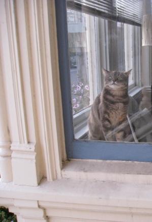 Sashi, awaiting our return.